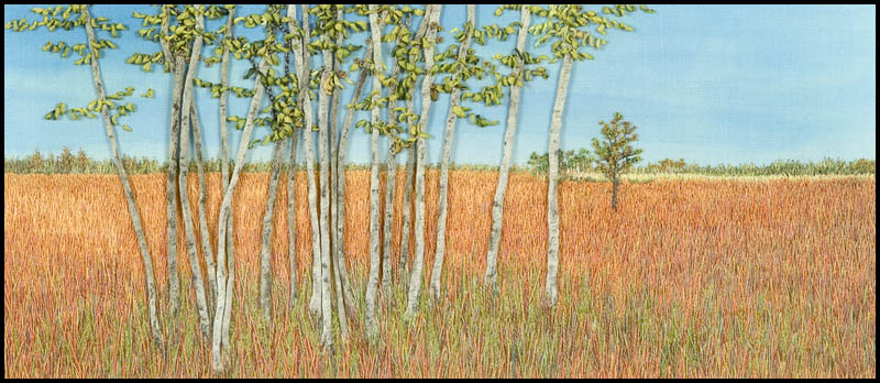 Tall Grass and Trees